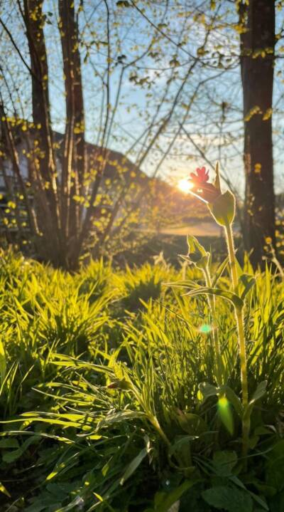 Blume-Wald